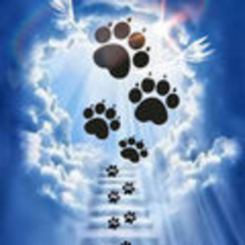 Hund Gestorben Beileid Ausdrücken