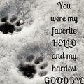 Du warst mein schönstes Hallo und mein schwerstes Auf Wiedersehe