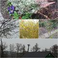 Unser Garten erwacht. Mirabelle, Goldregen, Johannisbeere &Adebar