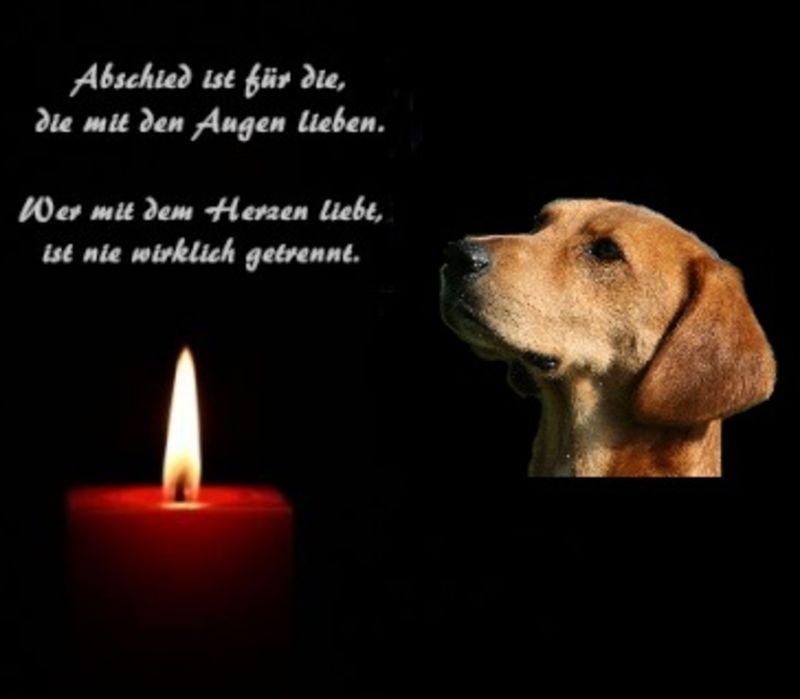 Gestorben trost hund hund_gestorben_trost —