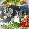 unsere Seelenhunde Benny und Nelly